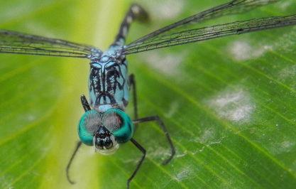 Colores de Insecto – Jorge Silva